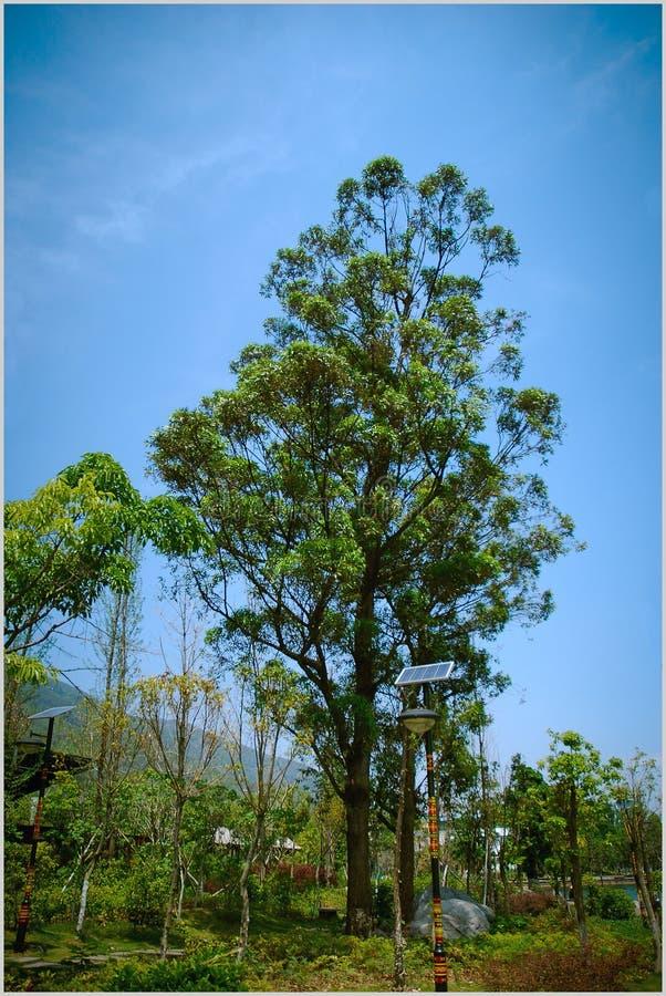 Sichuan Xichang `-träd-sommar royaltyfri fotografi