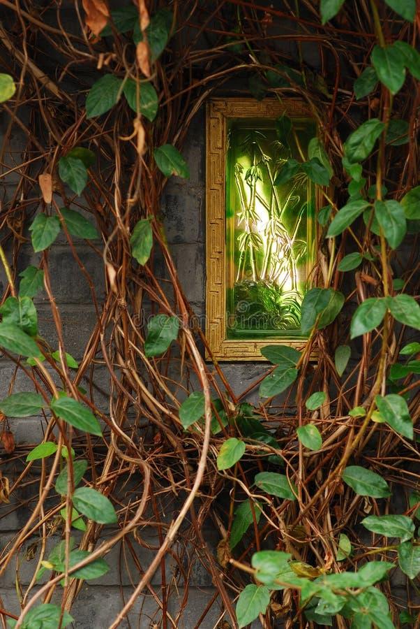 Sichuan Xichang växt av släktet Trifolium royaltyfri foto