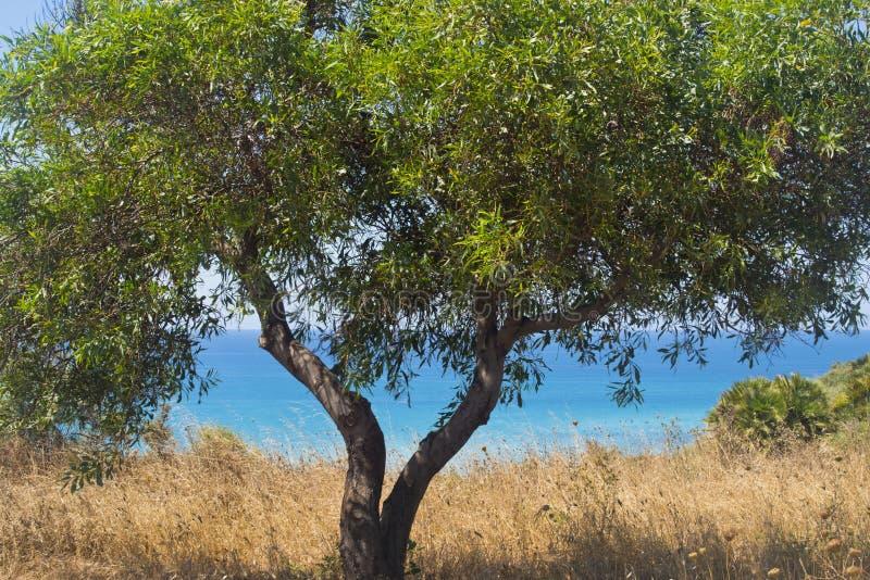 Sicilië, Bovo Marina die, drie het overzees bekijken; stock afbeeldingen