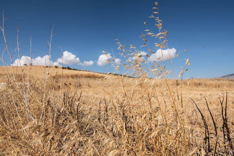 Sicilian land 2 fotografering för bildbyråer