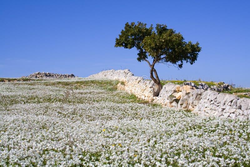 sicilian liggande arkivbilder