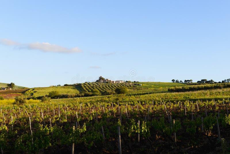 Sicilian vingård royaltyfria bilder