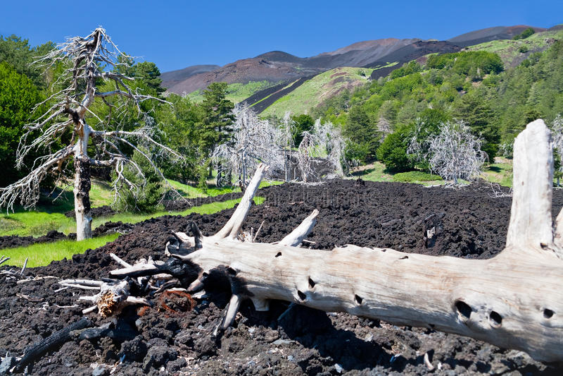 sicily för lava för etna flödesgreen härdad lutning royaltyfri fotografi