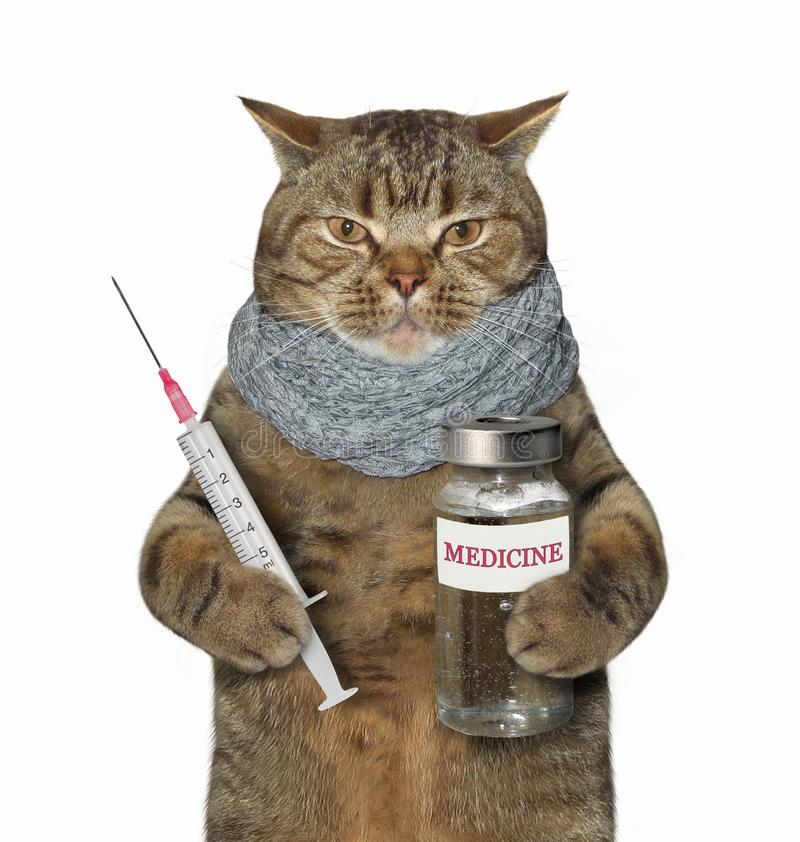 Sick cat holds a syringe and medicine stock images