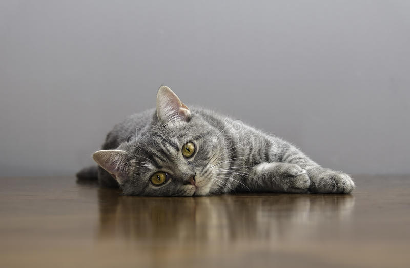 Sick cat on a table with medicines stock images
