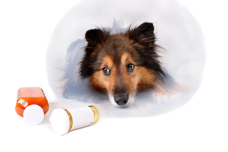 Download Sick dog stock image. Image of healthcare, pills, sick - 11644091