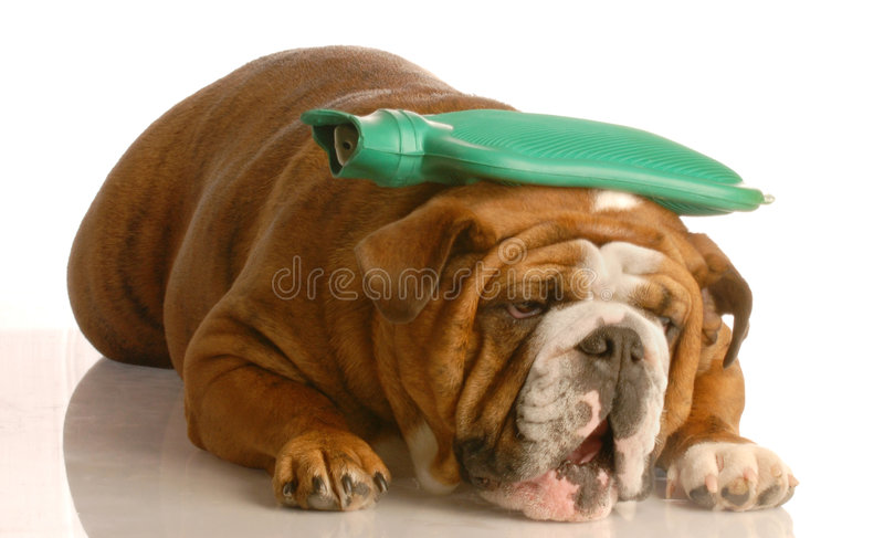 Download Sick Dog Royalty Free Stock Photography - Image: 6913247
