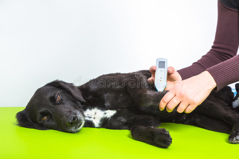 Dog Treatment Stock Photo Image Of Health Cute Medical