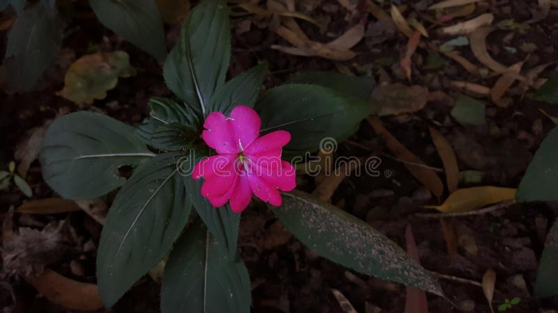 The sick flower royalty free stock images