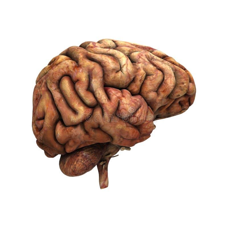 Download Sick Human Brain stock illustration. Illustration of learning - 36409931