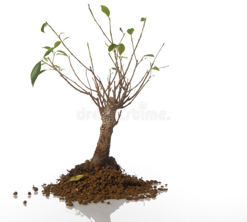 Sick tree stock image