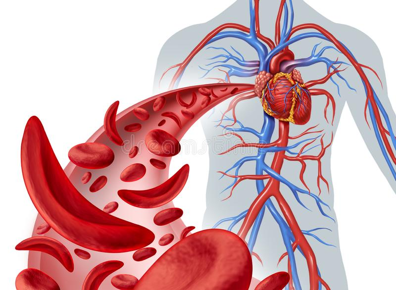 Sickle Cell Heart Circulation vector illustration
