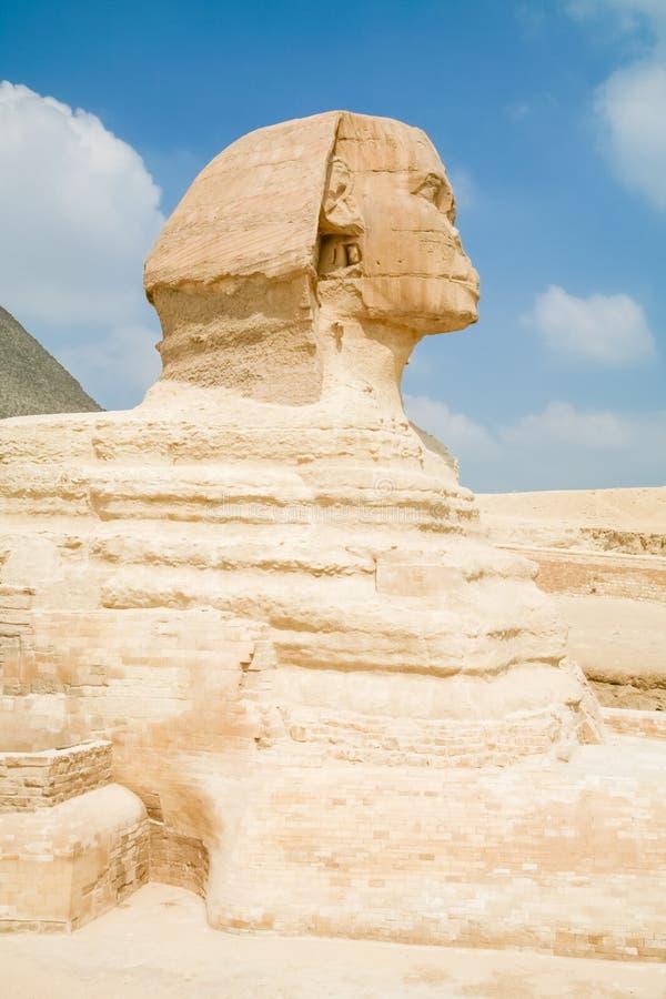 Sida av sfinxen i Egypten arkivbild