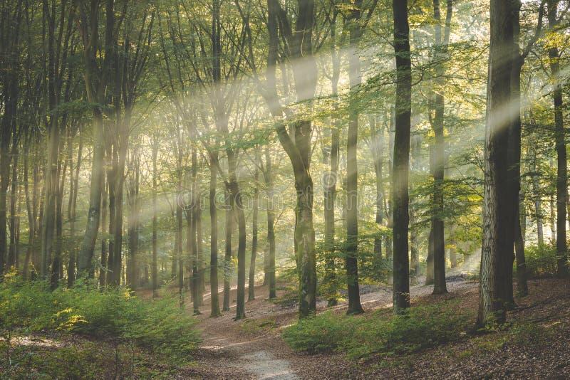 Sida tänd slinga till och med den Amerongse bosen Härliga villkor på att bedöva morgon går royaltyfria bilder