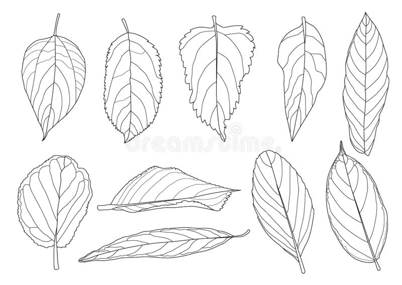 Sidalinjen svart för det enkla bladet och bladmodellkommer med för att färga för att dekorera på vit bakgrund royaltyfri illustrationer