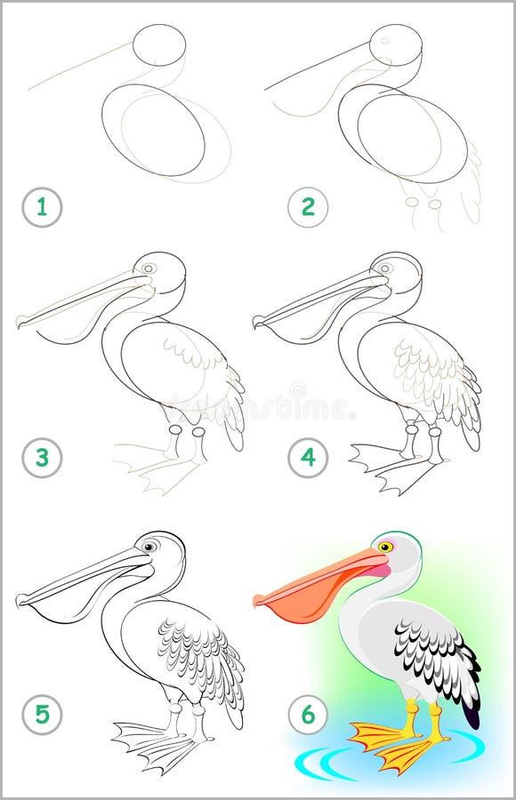 Sidan visar hur man lär stegvis att dra en gullig pelikan Framkallande barnexpertis för att dra och att färga stock illustrationer