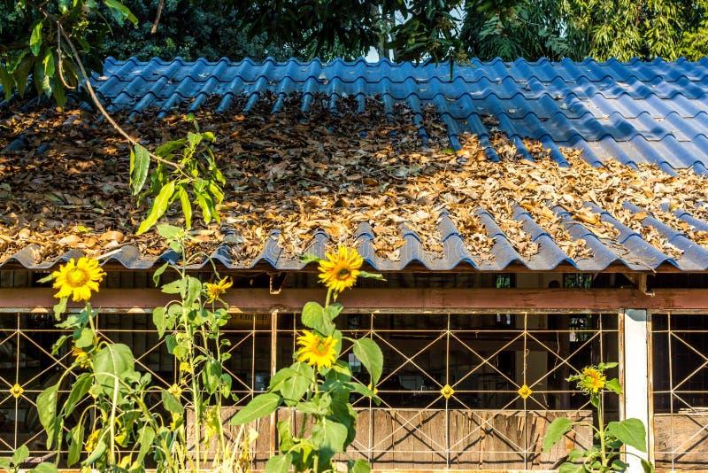 Sidanedgång på taket i skola royaltyfria foton