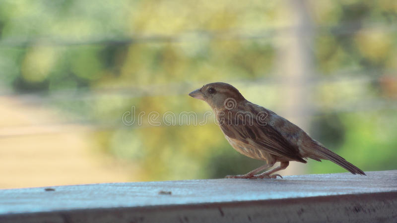 Side of a bird stock photos