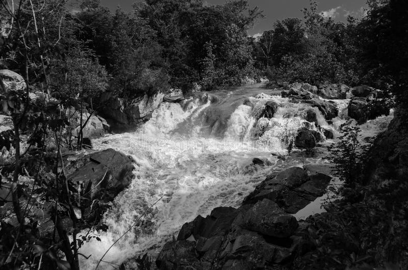 Potomac River in Flood B&W 1. A side channel of the Potomac River at Great Falls, on the Maryland side, carries a surge of spring water that overflows the river stock photography