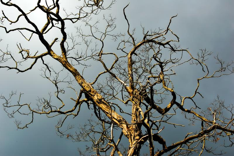 Side lit striking bare tree stands against a dark dramatic sky royalty free stock photo