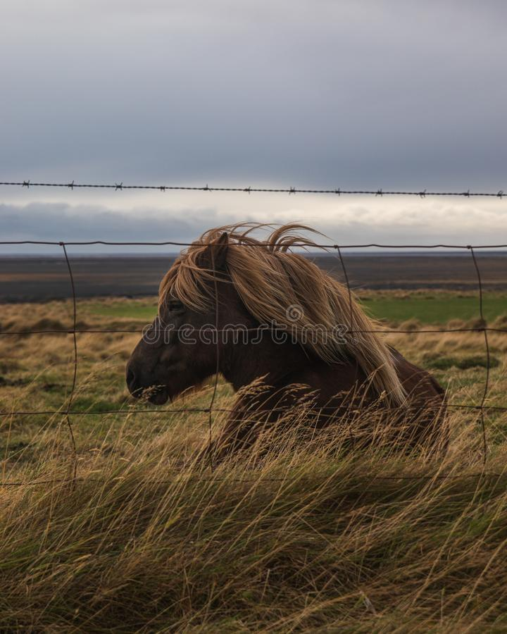 Side profile of a brown horse with blonde hair sitting in a meadow behind wire fences. The side profile of a brown horse with blonde hair sitting in a meadow stock photo
