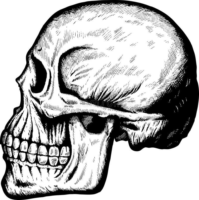 Side Skull royalty free illustration