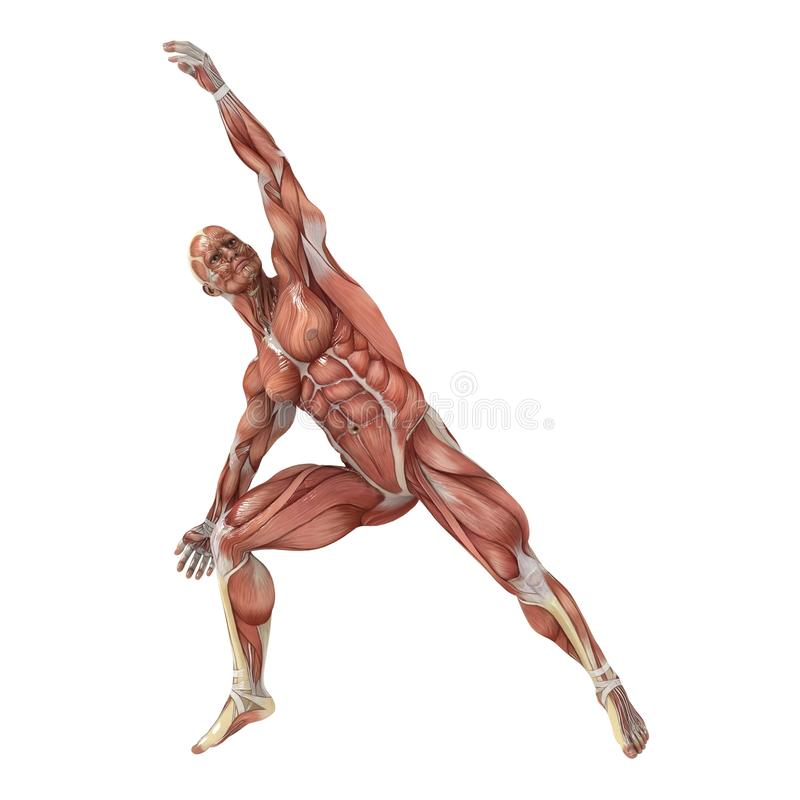 Side Stretch. A male model showing the muscles and his flexibility vector illustration