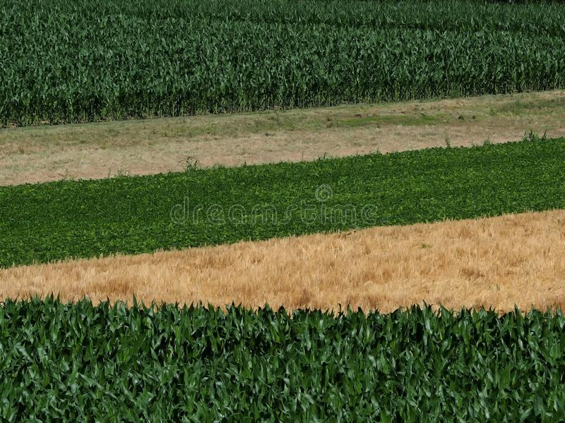 Top view of fields cultivated with different crops. Corn cob fields, wheat, beans and a freshly harvested one stock photos