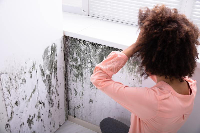 How to Get Rid of Mold on Walls Permanently