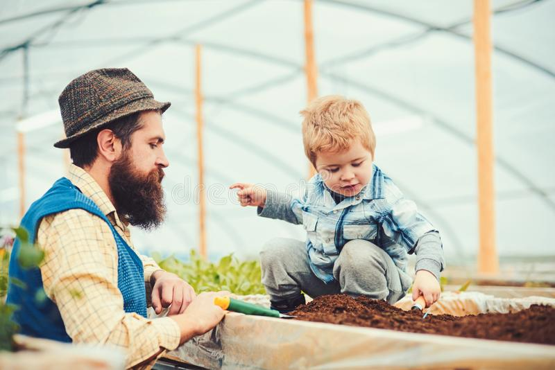 Side view bearded man looking at lovely kid playing in box full of soil. Daddy in blue vest, yellow shirt and hat. Side view bearded men looking at lovely kid stock photos