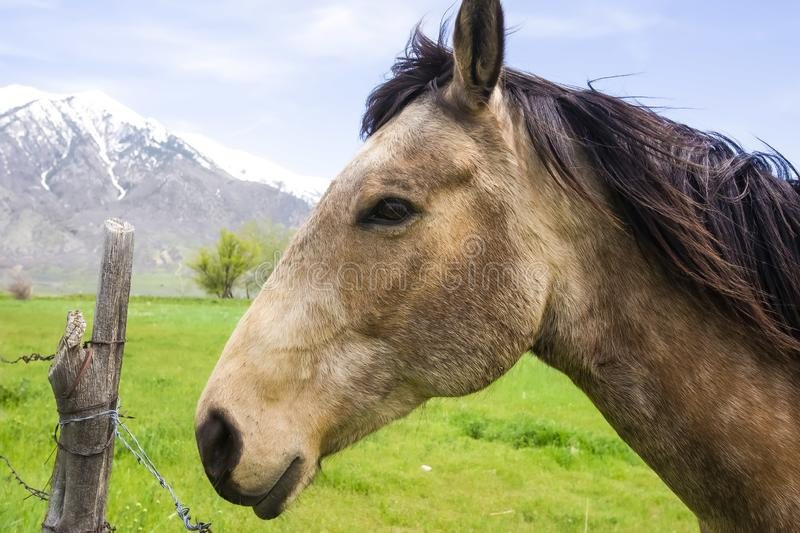 Side view of a brown horse with black mane against barbed wire fence and field stock images