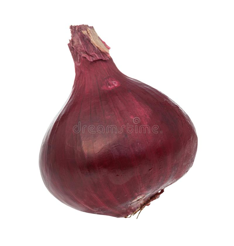 side view of bulb of ripe red onion isolated stock images