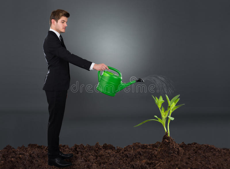 Side view of businessman watering plant royalty free stock photo