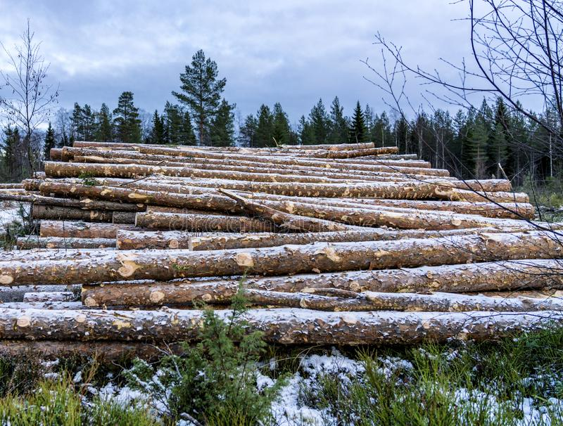 Side view of commercial timber, pine tree logs after clear cut of forest in Northern Sweden. Little snow cover trunks, cloudy. Winter day. Lappland, Scandinavia stock image