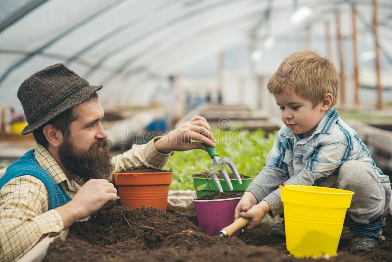 Side view daddy looking at his lovely boy playing with soil. Hipster with stylish beard in fedora hat helping his son stock photo