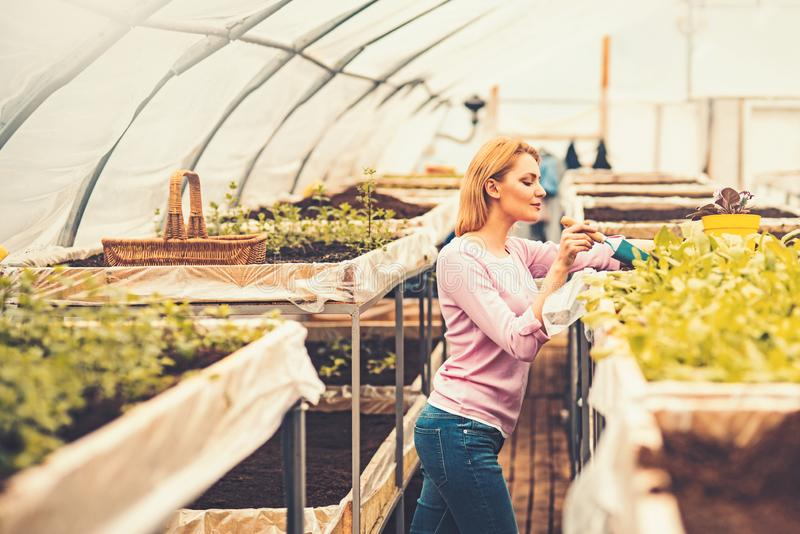 Side view florist in pink cardigan working in greenhouse. Blond slim woman holding small gardening spade and planting. Flowers stock photo