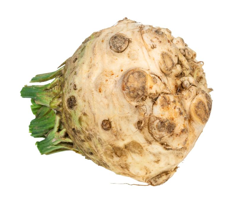 Side view of fresh organic celeriac (celery root. ) cutout on white background stock images