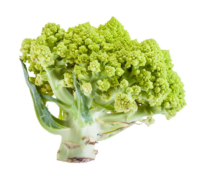 Side view of fresh romanesco broccoli isolated stock photography