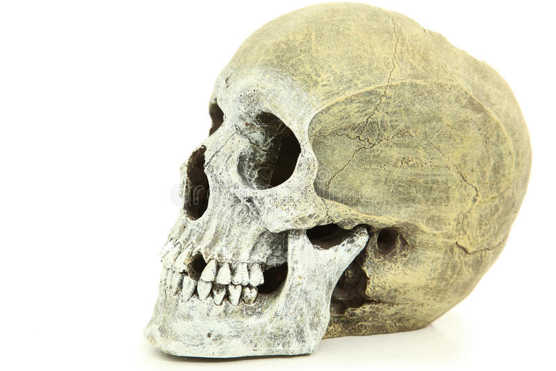 Side View Of Human Skull royalty free stock image