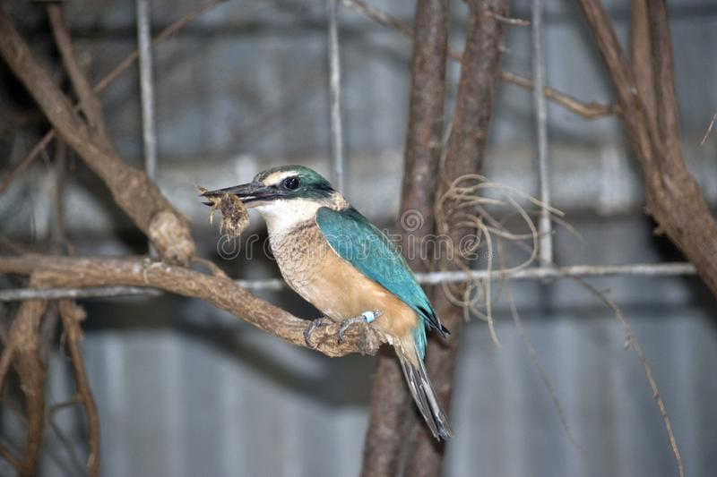 A side view of a kingfisher royalty free stock images