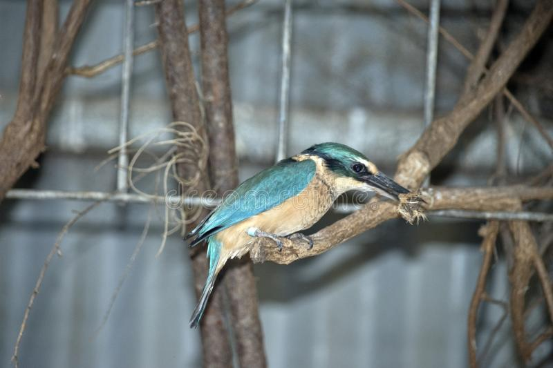 A side view of a kingfisher royalty free stock photography