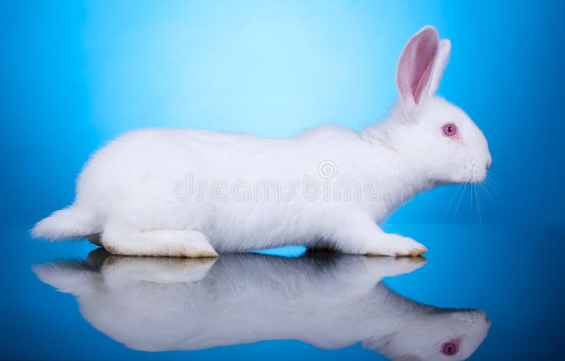 Side view of a little bunny stock photos