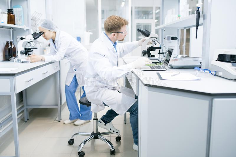 Scientist working with laptop and microscope royalty free stock photography