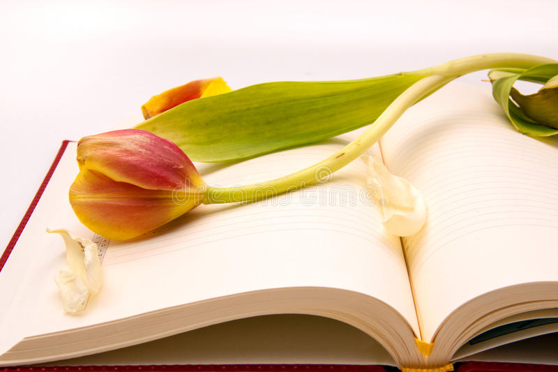 Side view of open notebook with withered tulip royalty free stock photos