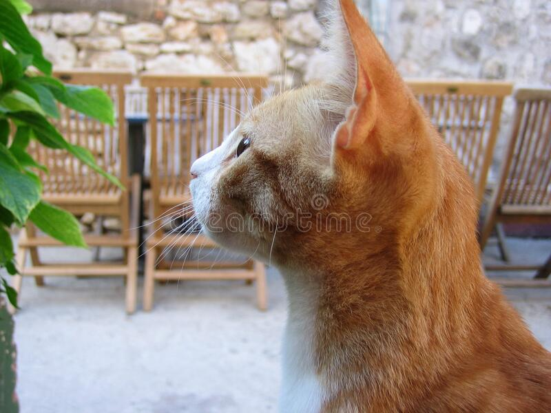 Side View of Orange Tabby Looking at Green Plant stock images
