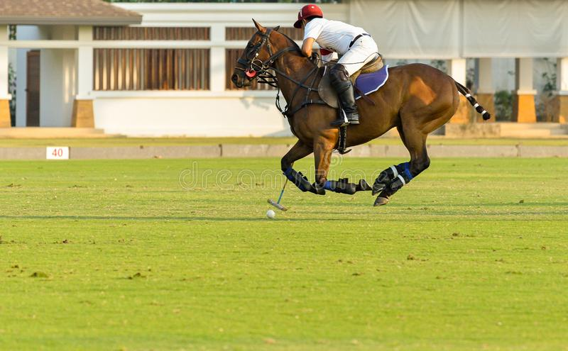 Side view picture of the Horse Polo player is using polo mallet hit polo balls during the match royalty free stock images