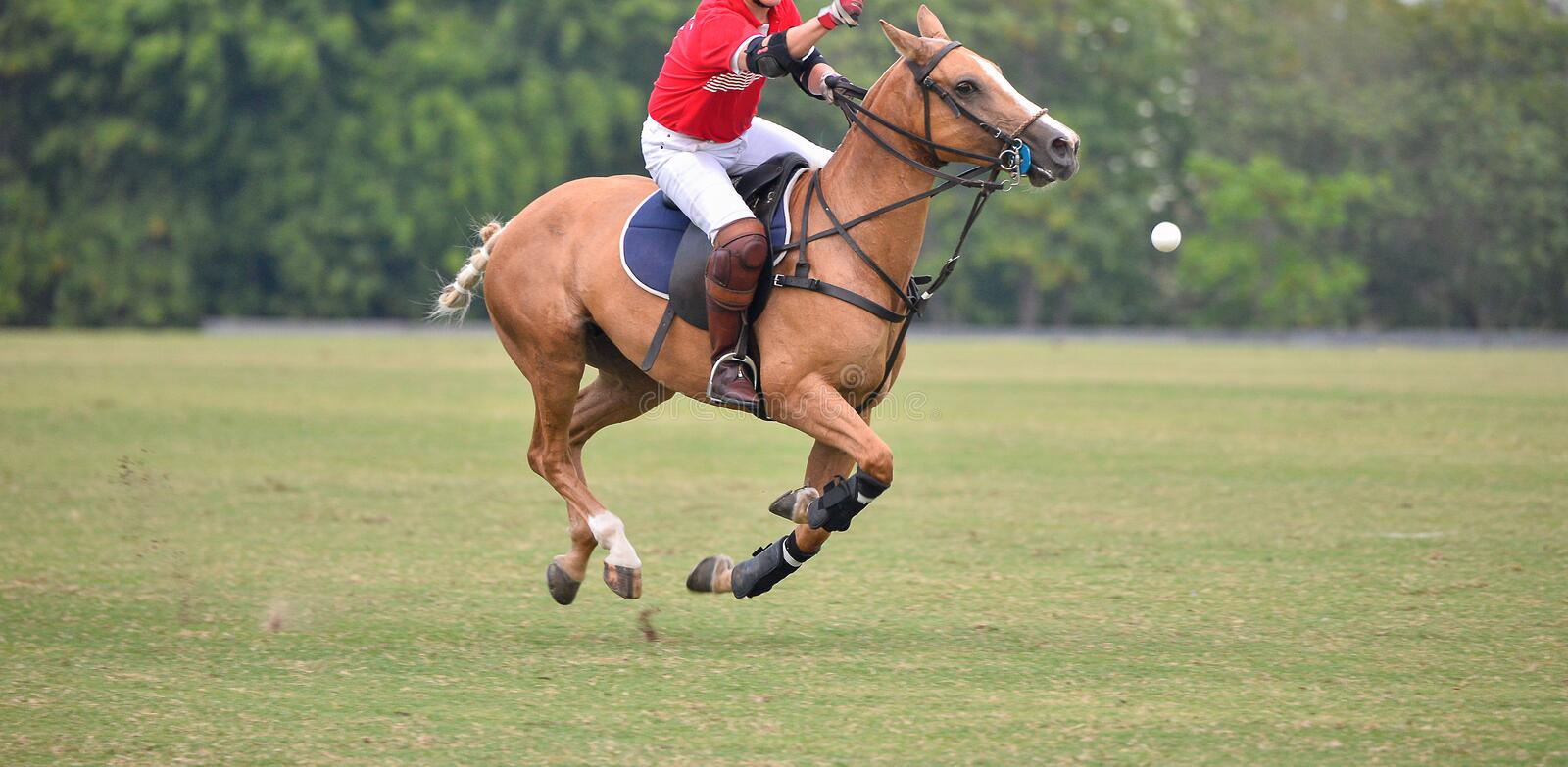Side view picture of the Horse Polo player. royalty free stock photo