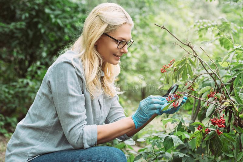side view of smiling female scientist looking at rowans by magnifying glass royalty free stock photo