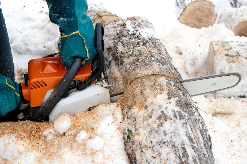 Side view at the time of sawing logs with a chainsaw stock photography