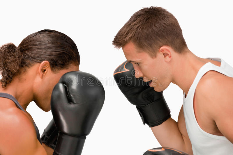 Side view of two boxers stock images